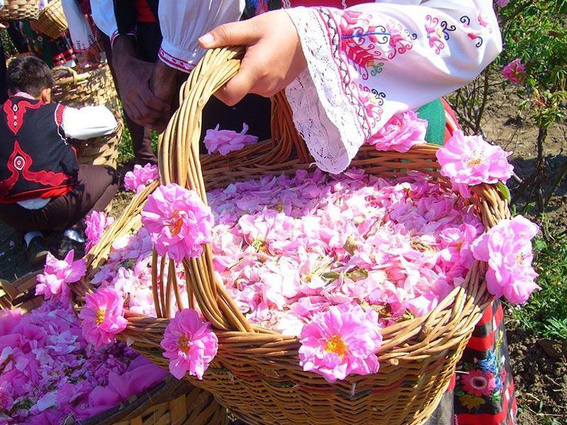 آئین گلاب گیری ، رسمی هزار ساله Rose and Rose Water