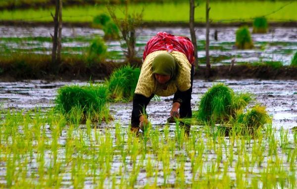 حمایت بنیاد برکت از باغداران و کشاورزان گیلانی
