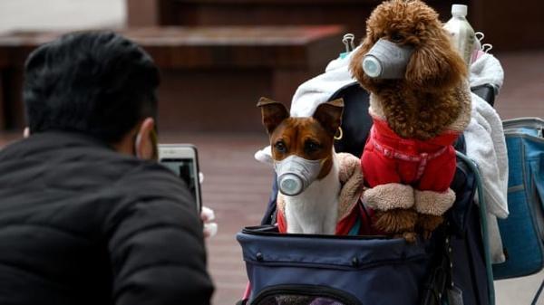 ابتلای یک سگ در هنگ کنگ به نوعی خفیف از ویروس کرونا