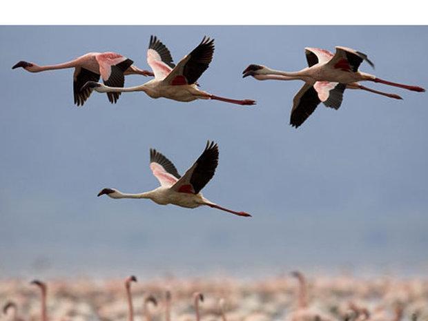 حیات 275 گونه پرنده در خطر
