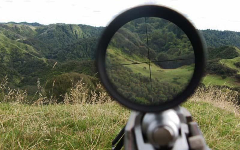 سهم دلالان از شکارفروشی چقدر است؟