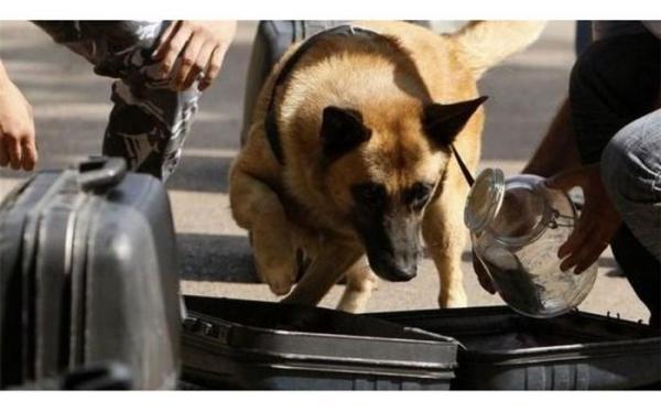 موافقت سازمان جهانی گمرک برای ایجاد آموزش منطقه ای سگ های موادیاب