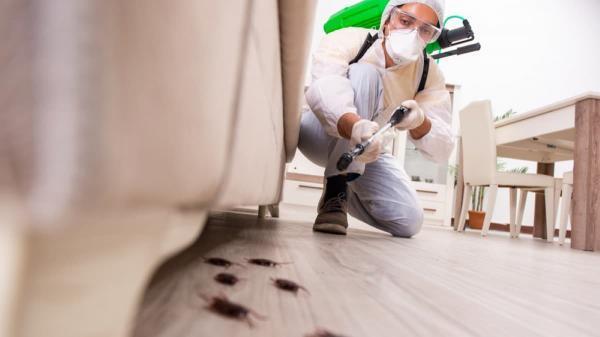 سمپاشی ساختمان : روش های خانگی و غیرخانگی آن چگونه است؟