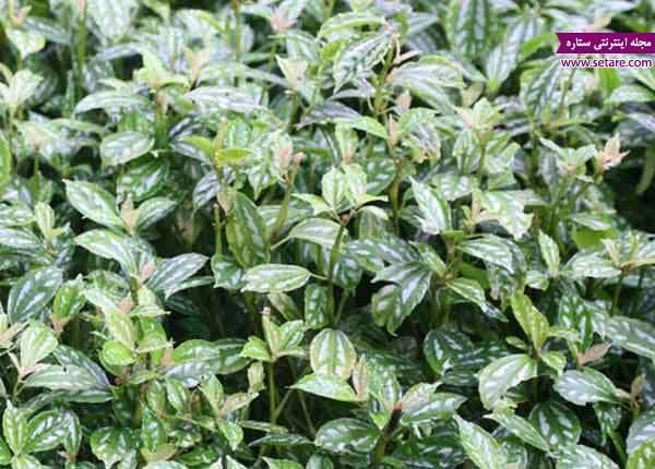 تراریوم چیست؟ (انواع گیاهان مناسب تراریوم برای ساخت تراریوم)